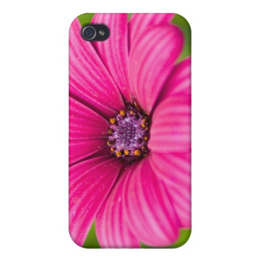 Caso rosado del iPhone 4 de la flor de la margarit iPhone 4 Cárcasas