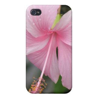 Caso rosado del iPhone 4 de la flor del hibisco iPhone 4/4S Funda