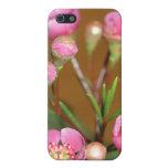 Caso rosado del iPhone 4 de la flor iPhone 5 Coberturas