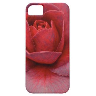 Caso rosado del iPhone de la camelia Funda Para iPhone 5 Barely There