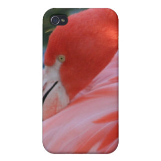 Caso rosado magnífico del iPhone 4/4S del flamenco iPhone 4 Fundas