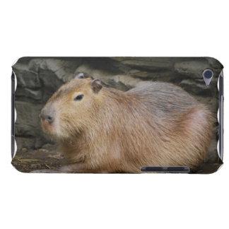 Caso salvaje de iTouch del Capybara Funda Para iPod De Case-Mate