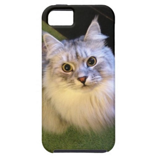 Caso siberiano elegante del iPhone 5 del gato iPhone 5 Carcasas