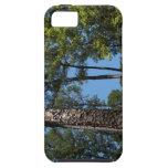 Caso soleado del iPhone 5 de maderas iPhone 5 Case-Mate Cárcasas