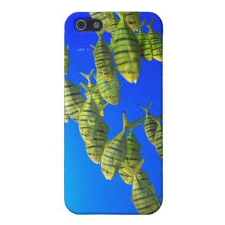 Caso tropical del iPhone de los pescados iPhone 5 Protectores
