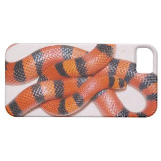 Caso universal del iPhone 5 de la serpiente de Funda Para iPhone 5 Barely There