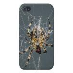 Casos del iPhone de la araña y del Web iPhone 4 Fundas