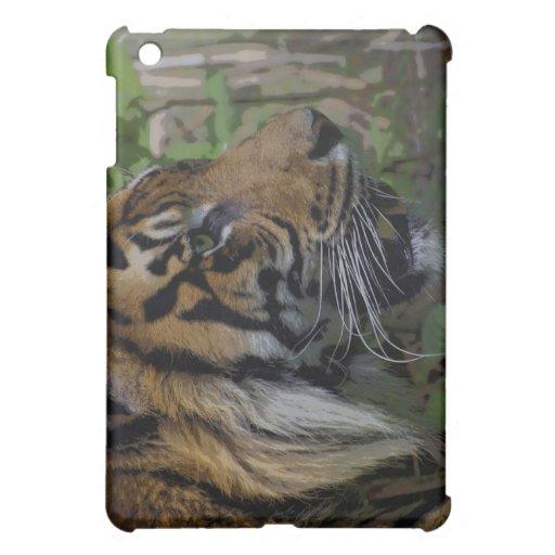 Casos grandes del Gato-Amante de la fauna del tigr