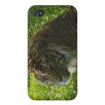 Casos grandes del Gato-Amante de la fauna del tigr iPhone 4 Cárcasas