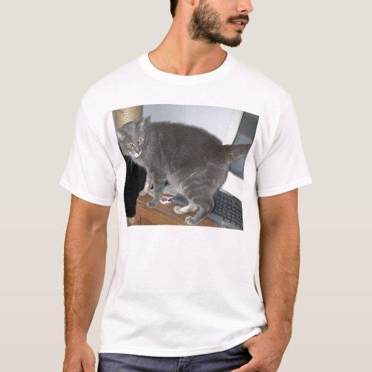 Casper la camisa del gato