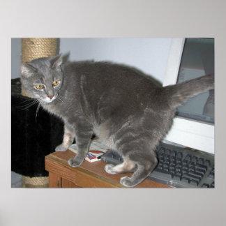 Casper la impresión de las miradas del gato póster