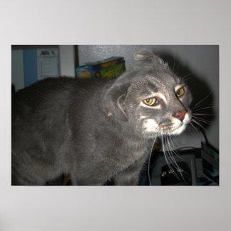 Casper la impresión divertida de los oídos del gat