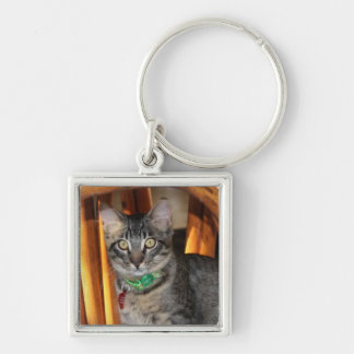 Caspian Adorable Cat Keychain
