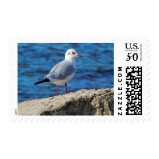 Caspian gull. postage