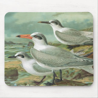 Caspian, Sandwich and Gull-billed Terns Mouse Pad