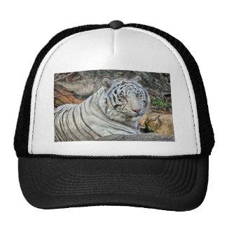 Casquillo (blanco) de la bola del tigre gorra