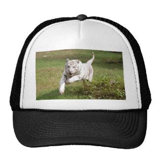 Casquillo blanco del tigre (6x4) gorros