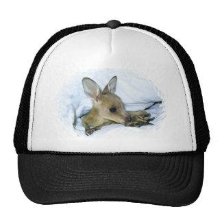 casquillo con la foto joven del canguro gorro