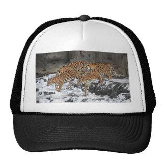 Casquillo de la bola del paquete del tigre gorros