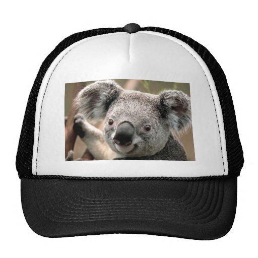Casquillo de la koala gorras de camionero