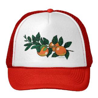 casquillo de la rama de la fruta cítrica gorras