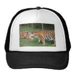 Casquillo de los amigos del tigre (7x5) gorra