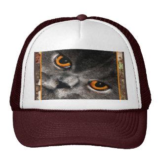 Casquillo de los ojos de gato gorro de camionero