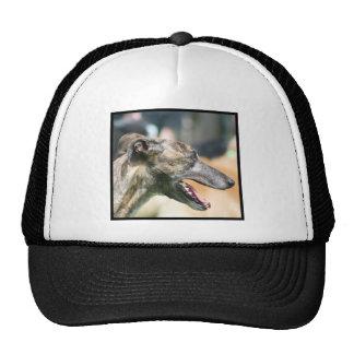 Casquillo del galgo gorras de camionero