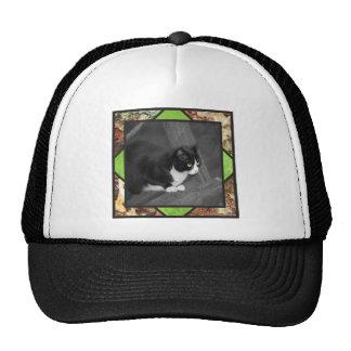 Casquillo del gato del corral gorra