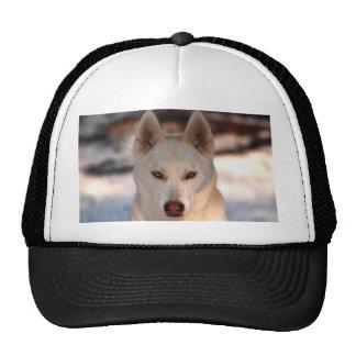 Casquillo del husky siberiano gorras