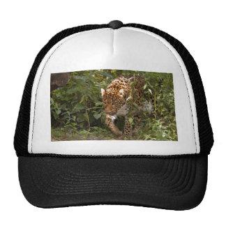 Casquillo del leopardo gorras de camionero