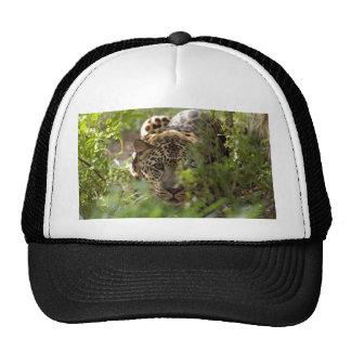 Casquillo del leopardo gorros bordados
