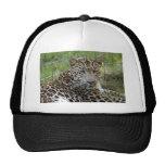 Casquillo del leopardo gorro