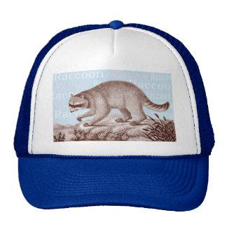 Casquillo del mapache - grande para los amantes an gorro de camionero