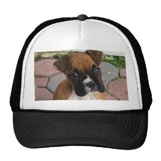 Casquillo del perrito del boxeador gorras