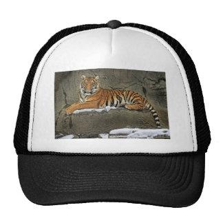 Casquillo malayo de la bola de Cub de tigre Gorro De Camionero