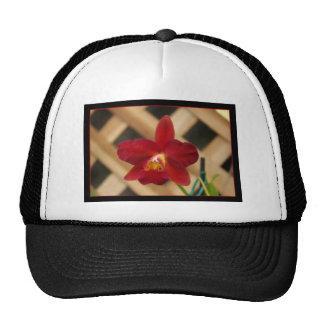 Casquillo rojo de la orquídea gorro