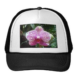 Casquillo rosado de las orquídeas gorros