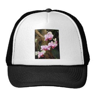 Casquillo rosado de las orquídeas gorros bordados