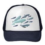 Casquillos azules de los gorras de la beluga de la