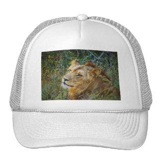 Casquillos máximos y gorras del león masculino afr
