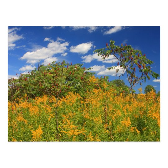 Cass Meadow September Athol MA Postcard