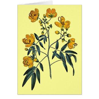 Cassia Corymbosa Card
