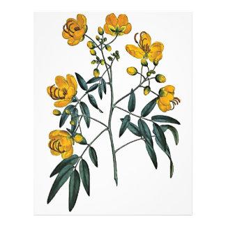 Cassia Corymbosa Flyer