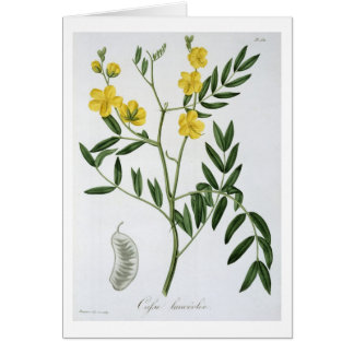 Cassia from 'Phytographie Medicale' by Joseph Roqu Card