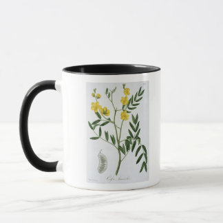 Cassia from 'Phytographie Medicale' by Joseph Roqu Mug