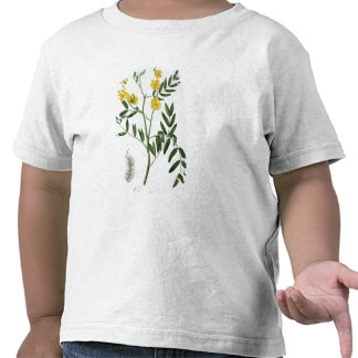 Cassia from 'Phytographie Medicale' by Joseph Roqu T Shirts