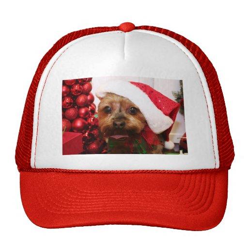Cassie - Yorkshire Terrier - Scharr Gorros Bordados