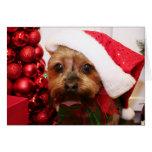 Cassie - Yorkshire Terrier - Scharr Tarjetas