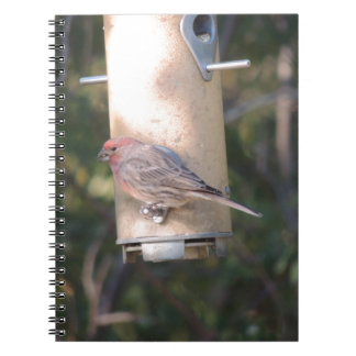 Cassin s Finch at a Bird Feeder Journal